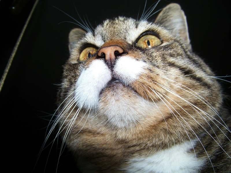 Geruchsinn einer Katze