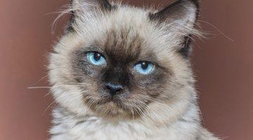 Tierquälereien und Tiertötungen