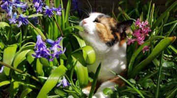 Giftige Pflanzen für Katzen mit Bildern