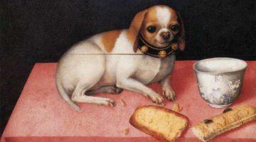Giovanna Garzoni | Still Life with Small Dog, 1648 | Galleria Palatina – Palazzo Pitti