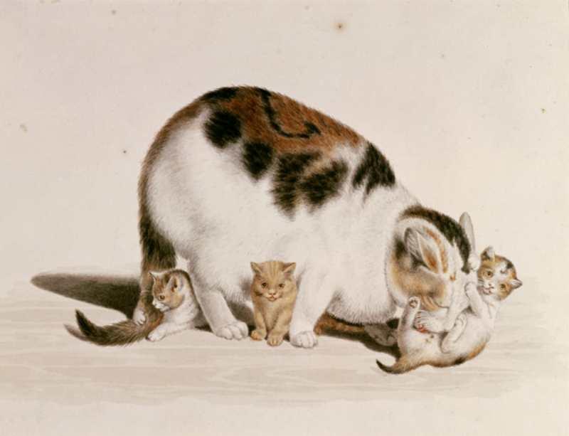 Gottfried Mind | Katzenmutter mit drei Jungen