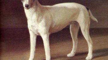 Johan Krouthén, Jack Russel Terrier, 1912