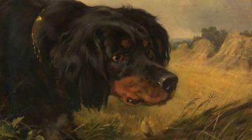 John Charles Dollman | 'Marquis', a Gordon Setter