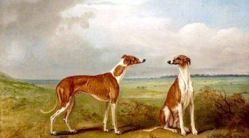 John E. Ferneley | A Pair of Greyhounds, 1824 | Walker Art Gallery, Liverpool