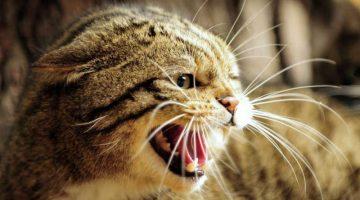 Körpersprache der Katze