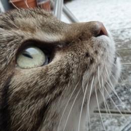 Miss Kah, eine Mitarbeiterin der Mäusemanufaktur