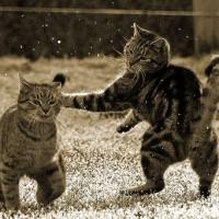 Revierverhalten und Aggressivität bei Katzen