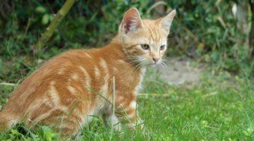 Katzenschnupfen