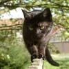 Katzen haben einen sehr ausgeprägten Gleichgewichtssinn   © borntaler, pixelio