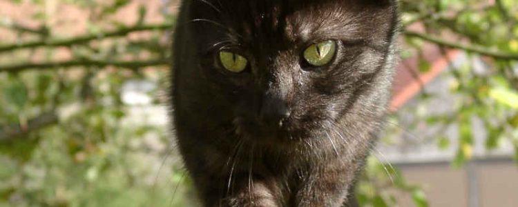 Katzen haben einen ausgeprägten Gleichgewichtssinn | © borntaler, pixelio