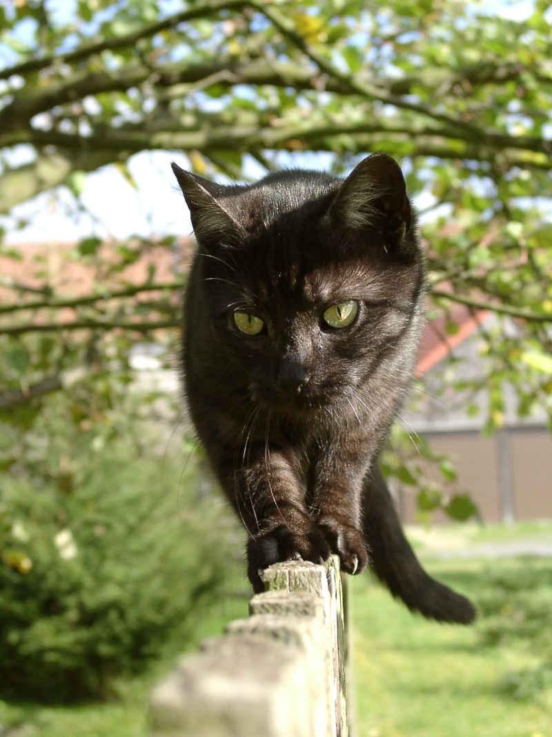 Katzen haben einen sehr ausgeprägten Gleichgewichtssinn | © borntaler, pixelio
