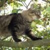 Kletterkünste der Katze   © Astrid Haindl, pixelio