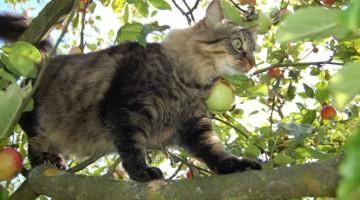 Kletterkunst der Katze