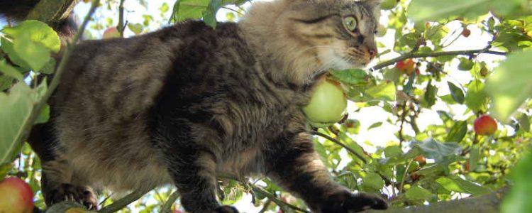 Kletterkünste der Katze | © Astrid Haindl, pixelio