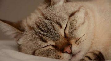 Schlafverhalten einer Hauskatze