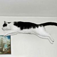 Der Katzensprung erfordert enorme Körperbeherrschung   © Bernd Sterzl, pixelio