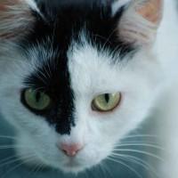 Stress bei Katzen   © Yvonne Kellermann, pixelio
