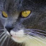 Tastsinn und Schnurrhaare der Katze | © Peter Freitag, pixelio