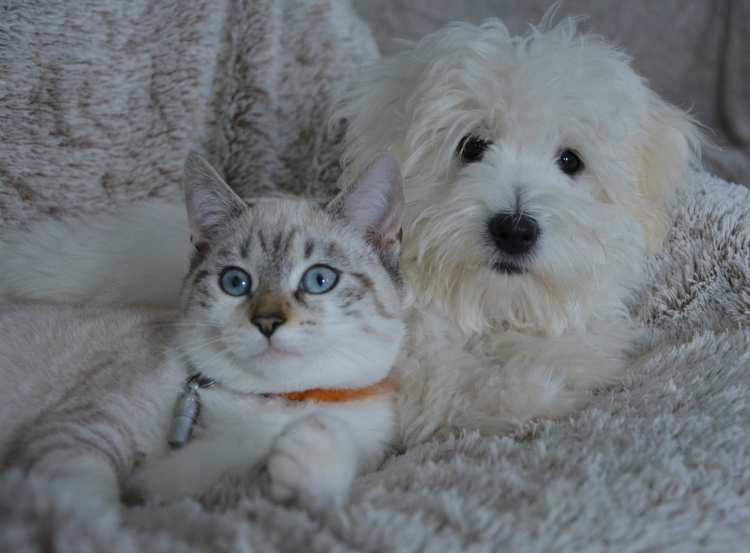 Demenz bei Hunden und Katzen