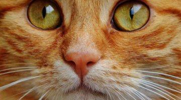 Katzenaugen - So sehen Katzen