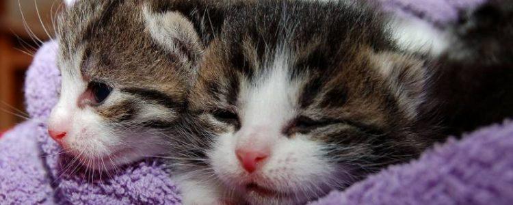 Katzenbabies - Wachstum und Entwicklung