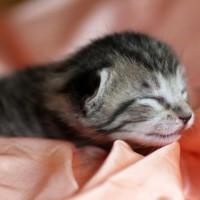 Katzenbabys - Wachstum und Entwicklung | Foto: Alexandra H./pixelio.de