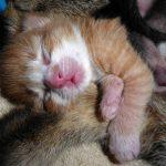 Katzenbaby zwei Stunden alt | Foto: Petra Hegewald / pixelio.de