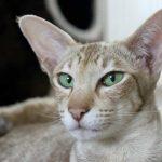 Das Gehör der Katze