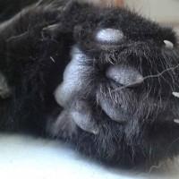 Unterseite einer Katzenpfote | © Catplus.de