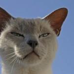 Die Katzensprache