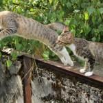 Der Katzensprung erfordert enorme Körperbeherrschung