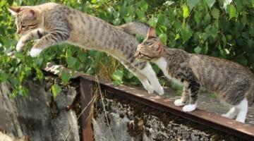 Der Katzensprung