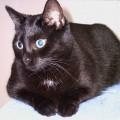 Foto: Nana /  Catplus.de