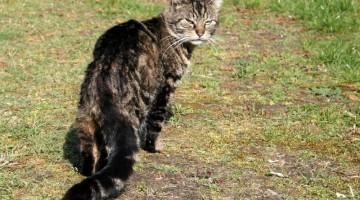 Die kritische Distanz bei Katzen / Foto: marika/Pixelio.de