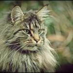 Nierenerkrankungen bei Katzen