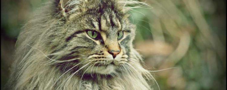 Nierenerkrankungen bei Katzen | Foto: Jewgenia Stasiok / pixelio.de
