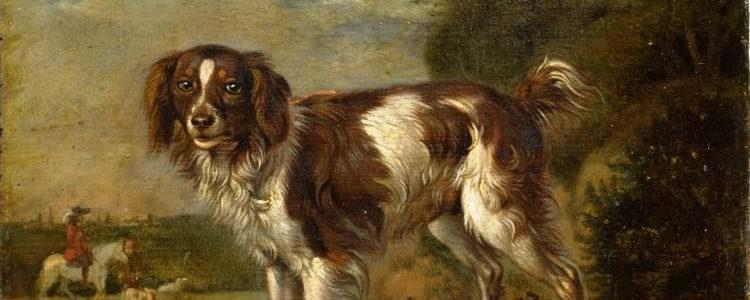 Paulus Potter | Een patrijshond, 1653 | Rijksmuseum Amsterdam