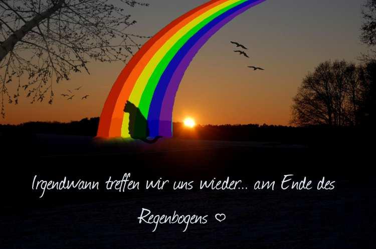Regenbogenbrücke - Abschied von Tieren | Catplus.de