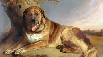 Richard Ansdell | A Mastiff, 1841 | Photo credit: Walker Art Gallery