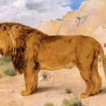 Rosa Bonheur | Study of a Lion