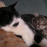 Das Schlafverhalten der Katze