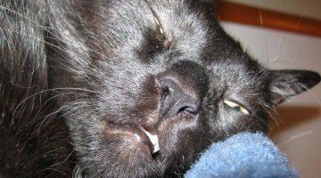 Tiefschlaf bei Katzen | (c) Catplus.de