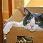 Der Katzenumzug