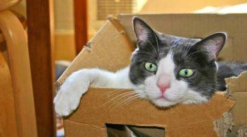 Der Katzenumzug: wenn's in ein neues Zuhause geht