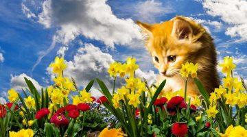 Ungiftige Pflanzen für Katzen mit Bildern