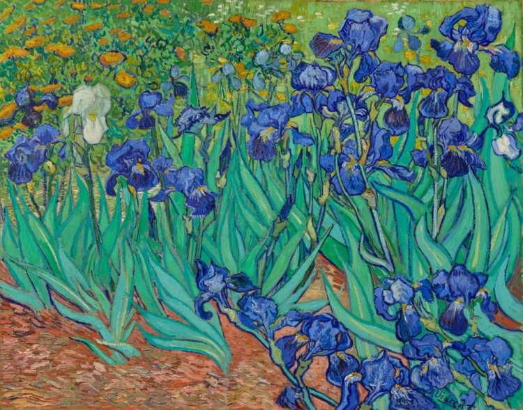 Vincent van Gogh | Irises, 1889